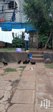 Baby Male Purebred Rottweiler | Dogs & Puppies for sale in Nairobi, Karen
