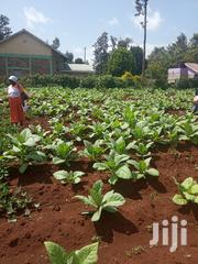 Prime Plots for Sale at Sagana,50*100 | Land & Plots For Sale for sale in Kirinyaga, Kiine