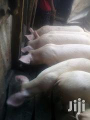 Pigs And Piglet | Livestock & Poultry for sale in Nairobi, Ngando