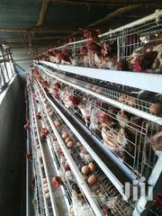 Chicken Layer Cages For 1000 Birds | Farm Machinery & Equipment for sale in Nairobi, Roysambu