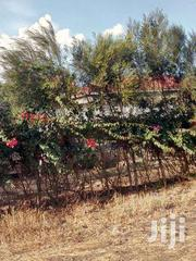 Kiserian Prime 1/8 Acre For Only 1.7m | Land & Plots For Sale for sale in Kajiado, Ngong