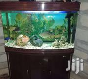 Imported Fish Tank On Sale | Home Accessories for sale in Uasin Gishu, Kimumu