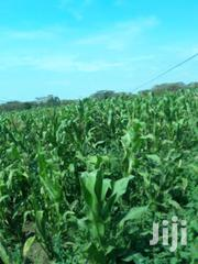 Narok Developed Agricultural Land | Land & Plots For Sale for sale in Narok, Ololulung'A