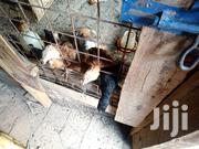 Chicks For Sale | Livestock & Poultry for sale in Machakos, Kathiani Central