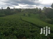 8.5 Acres Tea Farm Karatina | Land & Plots For Sale for sale in Nyeri, Karatina Town
