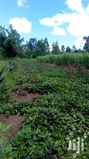 1.5 Acre Piece of Land for Sale in Matunda, Mois Bridge. | Land & Plots For Sale for sale in Kakamega, Likuyani