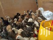 5 And 8 Weeks Old Local Chicks For Sale At Discounted Prices | Livestock & Poultry for sale in Nairobi, Ruai