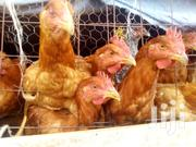Corks For Sale | Livestock & Poultry for sale in Nairobi, Ruai