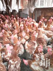 Three Months Old Layers For Sale | Livestock & Poultry for sale in Nairobi, Umoja II