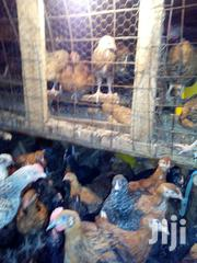 Kienyeji Chicks Of All Ages In Kisii   Livestock & Poultry for sale in Nyamira, Bogichora