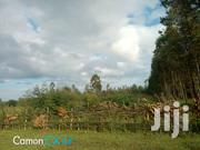Half An Acre Blue Gum Plantation. | Land & Plots for Rent for sale in Kisii, Borabu / Chitago