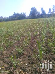 Half An Acre On Sale At Bokoli Area, Arable And Accessible. | Land & Plots For Sale for sale in Bungoma, Bukembe East