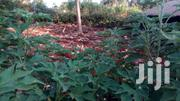 3/4 ACRE, 1/4 ACRE AND 1/8 SIZE OF LAND. | Land & Plots For Sale for sale in Nairobi, Pangani