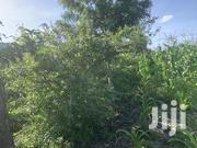Plot for Sale   Land & Plots For Sale for sale in Machakos, Masinga Central