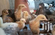 3 Weeks Improved Kienyeji Chicks. | Livestock & Poultry for sale in Nairobi, Komarock