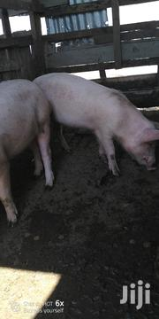 Mature Pigs | Livestock & Poultry for sale in Nairobi, Ruai