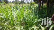 5 Acres Touching Kutus/Kerugoya Road Kirinyaga. | Land & Plots For Sale for sale in Kirinyaga, Kerugoya