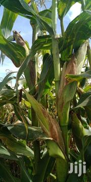 Agricultural Land For Sale In Moiben Sub-county | Land & Plots For Sale for sale in Uasin Gishu, Moiben