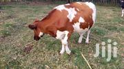 Ayrshire Cows For Sale | Livestock & Poultry for sale in Kericho, Kapkugerwet
