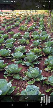 Farm Products-cabbages ,Fruits,Celery,Beet Roots For Sale. | Meals & Drinks for sale in Nyeri, Karatina Town