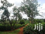 313 Acres With Coffee For In Kiambu | Land & Plots For Sale for sale in Kiambu, Githunguri