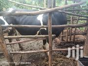 Cow For Sale | Other Animals for sale in Kiambu, Limuru Central