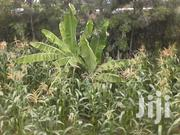 About 5 Acres Shamba With A Water Dam For Lease @ 200k Per Year | Land & Plots For Sale for sale in Nairobi, Ruai