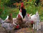 Chicken And Eggs | Livestock & Poultry for sale in Nairobi, Nairobi Central