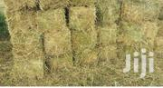 Rhodes Hay Grass | Feeds, Supplements & Seeds for sale in Kiambu, Ndeiya