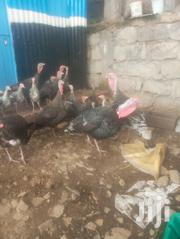 Selling Turkeys | Livestock & Poultry for sale in Nairobi, Mwiki