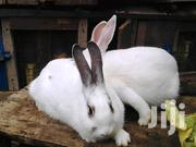 Rabbits Pure Breeds | Livestock & Poultry for sale in Nairobi, Kasarani
