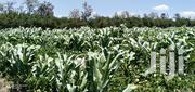 10 Acres Prime Agricultural Land at Matanya With River | Land & Plots For Sale for sale in Laikipia, Tigithi