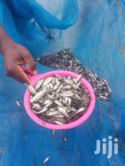 Fish Fingerlings For Sale | Livestock & Poultry for sale in Nairobi, Kahawa West