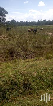 Land 5 Acres in Entebes 800k Per Acre With Ready Title Deed   Land & Plots For Sale for sale in Trans-Nzoia, Endebess