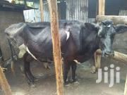 Daily Cows | Livestock & Poultry for sale in Kiambu, Township C