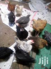 2months Improved Kienyeji Chicks... | Livestock & Poultry for sale in Kirinyaga, Thiba