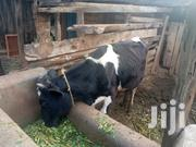 Young Bull For Sale | Livestock & Poultry for sale in Kiambu, Township C