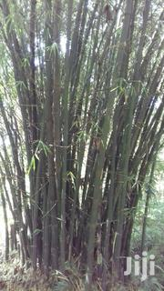 Mature Bamboos | Feeds, Supplements & Seeds for sale in Vihiga, Lyaduywa/Izava