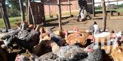 2-3months Old   Livestock & Poultry for sale in Uasin Gishu, Langas