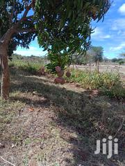 Sell Of Mangoes | Meals & Drinks for sale in Machakos, Wamunyu