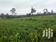 1 Acre Of Land For Sale | Land & Plots For Sale for sale in Nakuru, Viwandani (Naivasha)