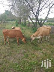Looking For Predigree Jersery For Breeding | Livestock & Poultry for sale in Kwale, Tsimba Golini
