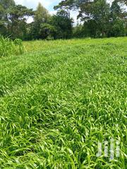One Acre Agricultural Land. It Is in Munyu Area, Kieni East. | Land & Plots For Sale for sale in Nyeri, Naromoru Kiamathaga