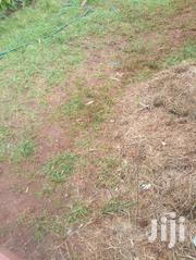 Nyeri Kiawara 1/8 Plot | Land & Plots For Sale for sale in Nyeri, Kamakwa/Mukaro