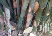 Giant Bamboo Trees | Meals & Drinks for sale in Murang'a, Ruchu