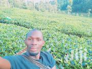 Land With Large Tea Bushes and Banana Plantation 1ha | Land & Plots For Sale for sale in Embu, Kyeni North