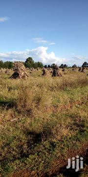 Land 5acres in Kitale Koseta 1.2m Per Acre   Land & Plots For Sale for sale in Trans-Nzoia, Kwanza