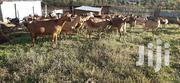 Goat Milk For Sale Very High In Calcium | Meals & Drinks for sale in Nakuru, Nakuru East