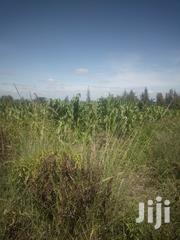 2 Acres In Kiambuthia, Naromoru | Land & Plots For Sale for sale in Nyeri, Naromoru Kiamathaga