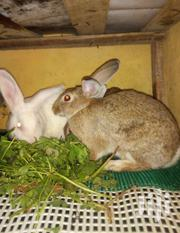 3 Fully Grown Rabbit,Both Hybrid And Local Mature Rabbit | Livestock & Poultry for sale in Nairobi, Kasarani